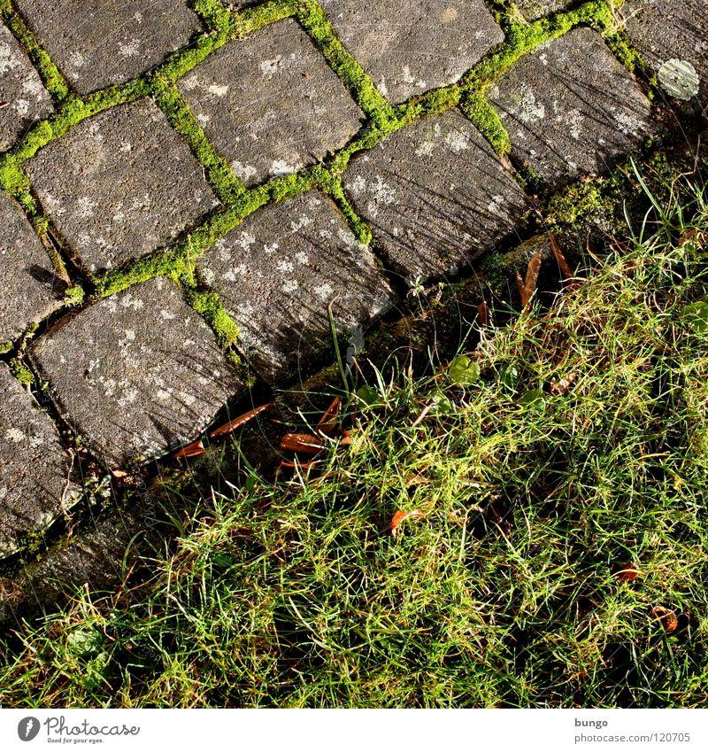 Quadrat geht immer Natur grün Wiese Gras Garten Stein Park Wachstum Rasen Bauernhof Kopfsteinpflaster diagonal Furche Fuge pflastern