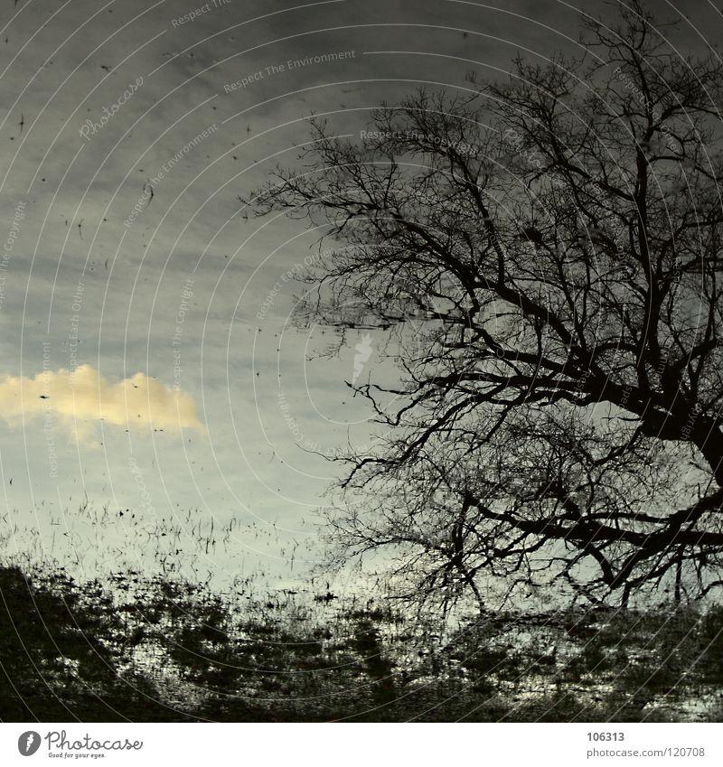 OUTBREAK Haus See Surrealismus Überschwemmung Natur Himmel Zweige u. Äste Geäst Gefäße Reflexion & Spiegelung Baum Wiese Ferne Grundbesitz träumen Wald Park