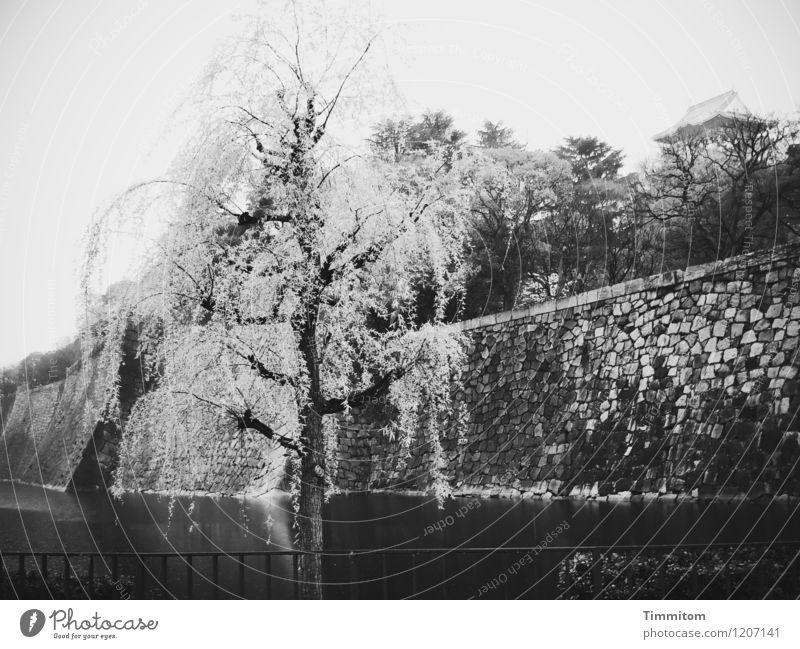 Osaka Castle. Umwelt Wasser Himmel schlechtes Wetter Baum Park Japan Burg oder Schloss Stein ästhetisch dunkel grau schwarz weiß Gefühle Erinnerung Mauer