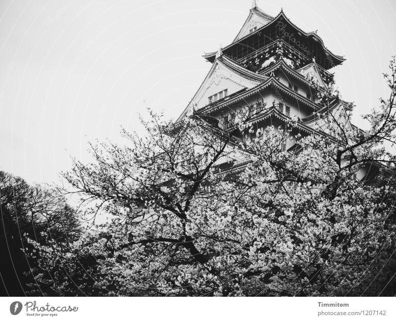 Osaka-jo Schloss Ferien & Urlaub & Reisen Umwelt Himmel Frühling schlechtes Wetter Baum Japan Burg oder Schloss Osaka-jo Schloß ästhetisch grau schwarz Gefühle