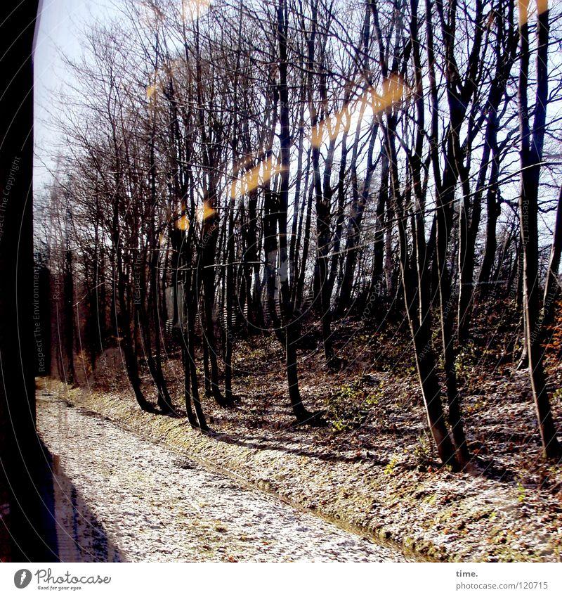 Gleiche Strecke selbe Gedanken Bahnfahren U-Bahn Zugabteil Baum Geschwindigkeit rollen Glasscheibe unterwegs Denken ausschalten Verkehr Langeweile Eisenbahn