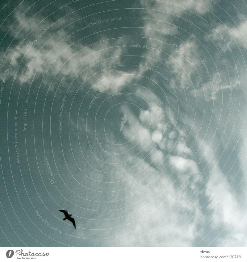 Der hat's schön da oben, seufzte Lukas Ferne Freiheit Himmel Wolken Vogel fliegen genießen träumen frei Unendlichkeit kreisen Schweben wegwollen Farbfoto
