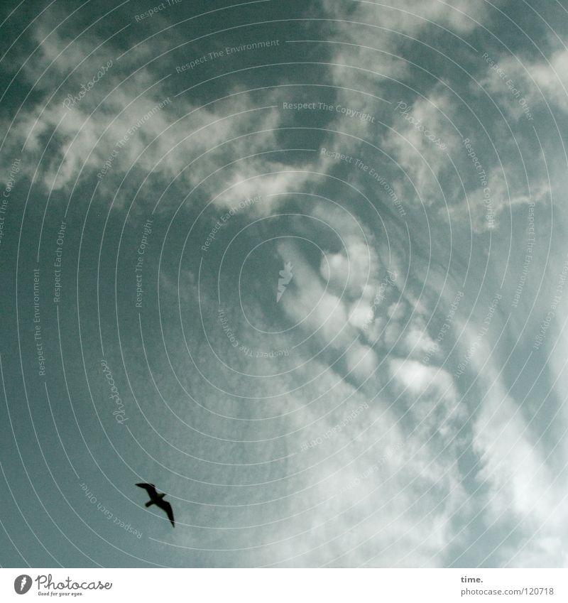 Der hat's schön da oben, seufzte Lukas Himmel Wolken Ferne Freiheit träumen Vogel fliegen frei Unendlichkeit genießen Schweben kreisen