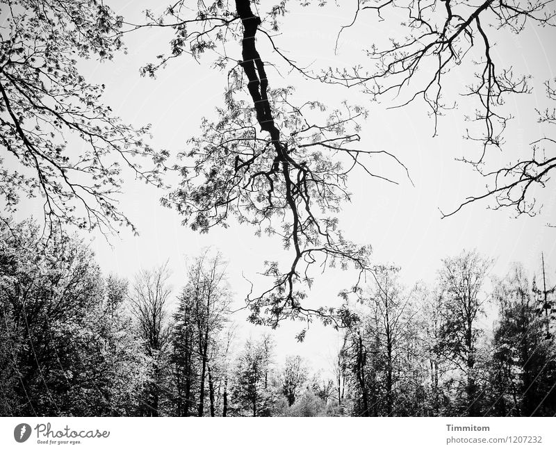 Im Wald. Himmel Natur Pflanze schwarz Umwelt Gefühle natürlich grau ästhetisch Ausflug einfach beeindruckend Größe