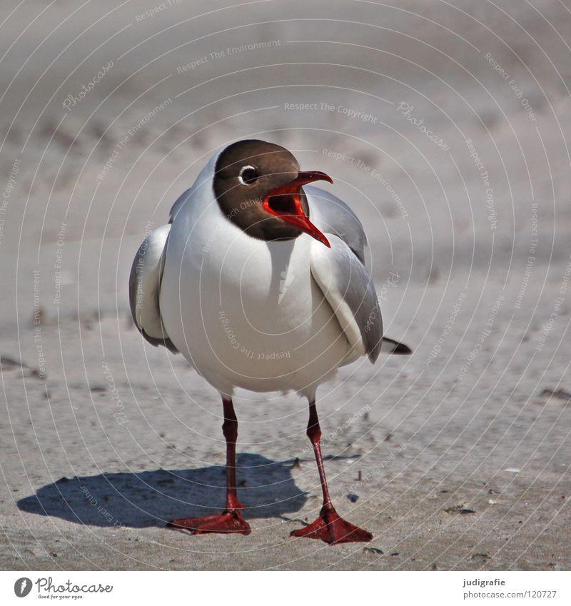 Lachmöwe Natur Meer Sommer Strand Ferien & Urlaub & Reisen Tier Farbe See Sand Beine Vogel Küste Umwelt fliegen bedrohlich Feder