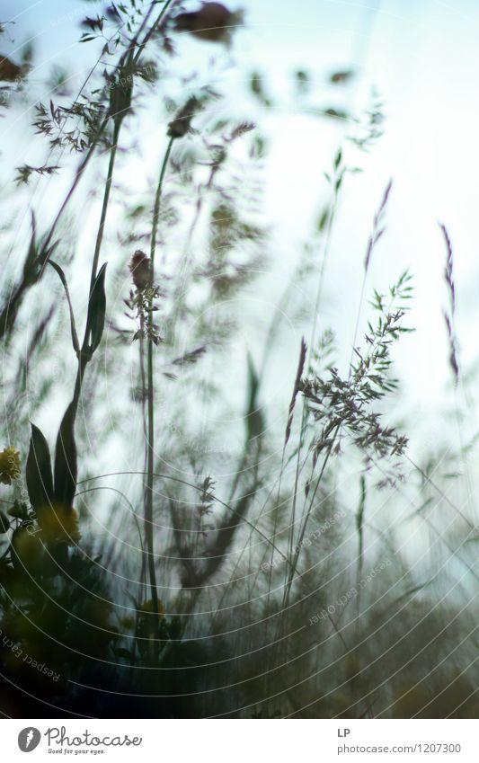 Kräuter 2 Umwelt Natur Pflanze Urelemente Luft Himmel Frühling Sommer Klima Wetter Schönes Wetter Gras Wildpflanze Garten Park Wiese Feld Fröhlichkeit frisch