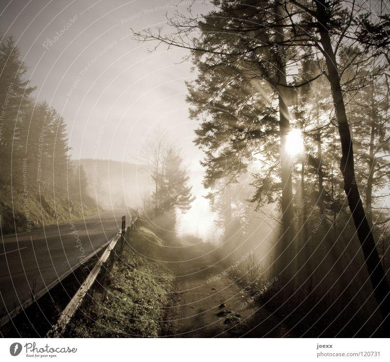 Leitstrahl Baum Baumkrone grell blenden Morgennebel Hoffnung Leitplanke Licht Sonnenaufgang Nebel unklar parallel Ferne Sonnenstrahlen strahlend ungewiss Fußweg