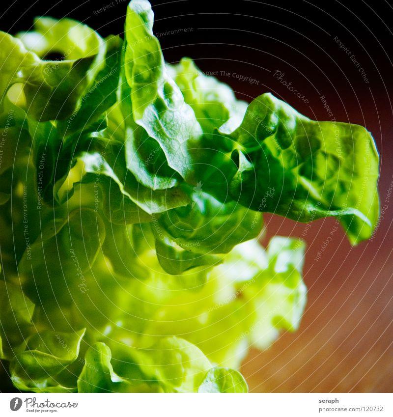 Salat grün Pflanze Gesunde Ernährung Gesundheit Speise Hintergrundbild Lebensmittel Foodfotografie frisch Gemüse lecker Vitamin Geschmackssinn Salatbeilage