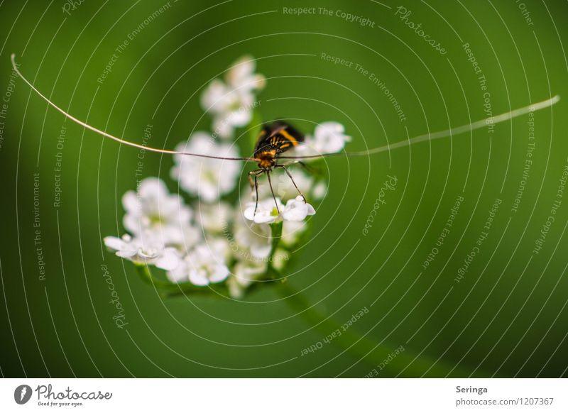 Unendlich lange Fühler Tier Nutztier Fliege Biene Schmetterling Käfer Tiergesicht 1 fliegen krabbeln Farbfoto Gedeckte Farben mehrfarbig Außenaufnahme