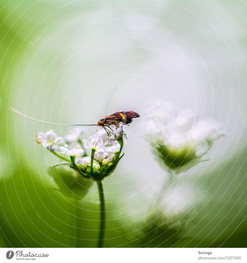 Was für eine Aussicht Umwelt Natur Pflanze Tier Sonne Sonnenlicht Frühling Sommer Blume Blüte Grünpflanze Nutzpflanze Schmetterling 1 fliegen Farbfoto