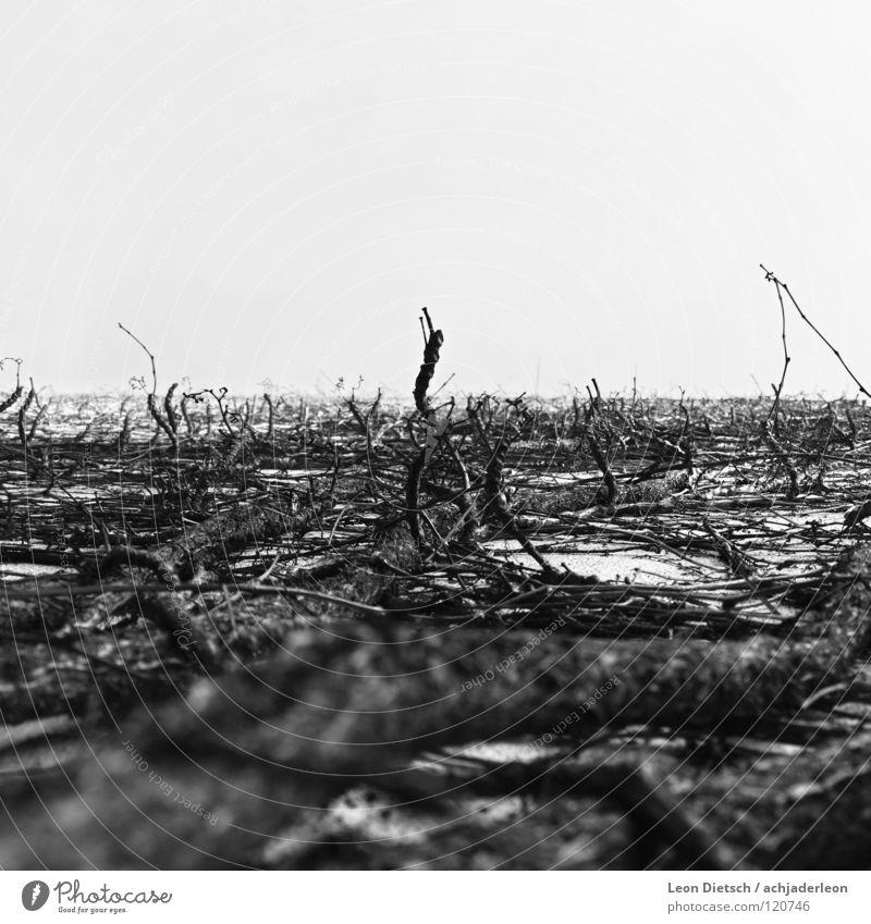 herausragend Holz klein Ast Sträucher schwarz weiß grau Natur Haus Tod trocken trist chaotisch verzweigt Krieg Schwarzweißfoto Makroaufnahme Nahaufnahme