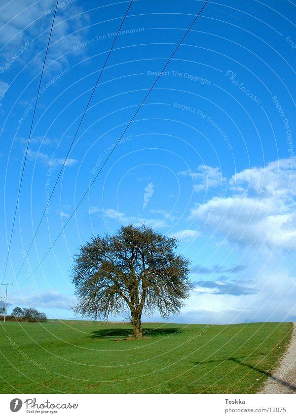 Baum unter Strom Baum Sonne grün blau Wolken Straße Frühling Wege & Pfade Elektrizität Strommast Kies himmelblau
