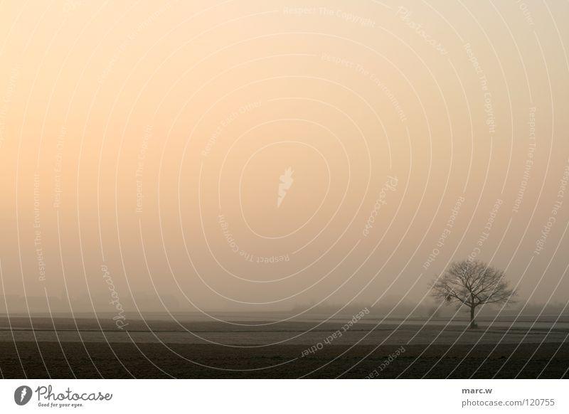 Verdammt kalter Morgen Himmel Baum Winter Landschaft Feld Nebel Viernheim