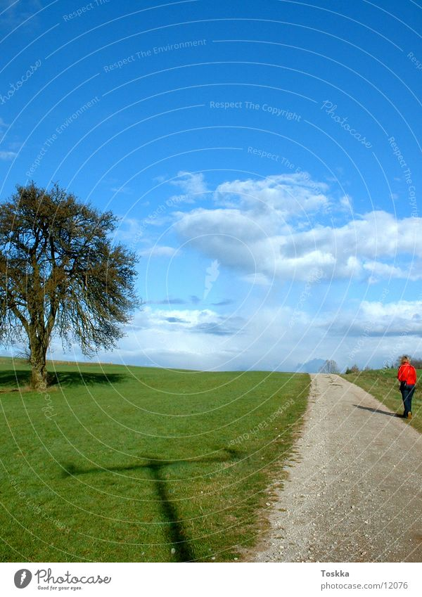Baumweg Sonne grün blau Wolken Straße Frühling Wege & Pfade Kies himmelblau Stein