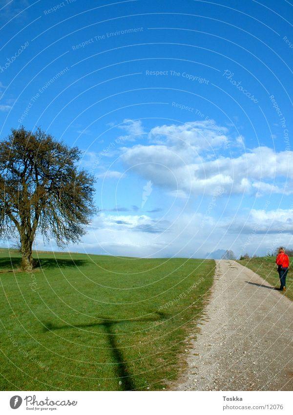Baumweg Baum Sonne grün blau Wolken Straße Frühling Wege & Pfade Kies himmelblau Stein