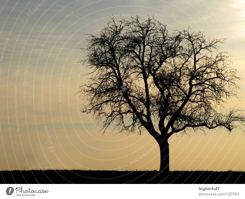 einsamer Baum Winter Geäst Einsamkeit Wolken Dämmerung Trauer Himmel kahler baum Zweig Ast Baumstamm Landschaft alleinstehend Sonne morgengraun geschlossen