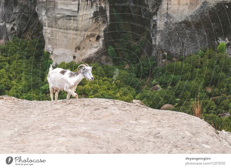 Meteora in Griechenland Ferien & Urlaub & Reisen Tourismus Sommer Berge u. Gebirge Klettern Bergsteigen Umwelt Natur Landschaft Tier Park Felsen Pelzmantel