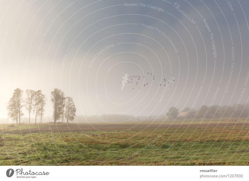 Frühlingsnebel Ferien & Urlaub & Reisen Ausflug Freiheit Natur Landschaft Nebel Baum Menschenleer Haus Vogel Erholung Ferne blau gelb grün weiß Unendlichkeit