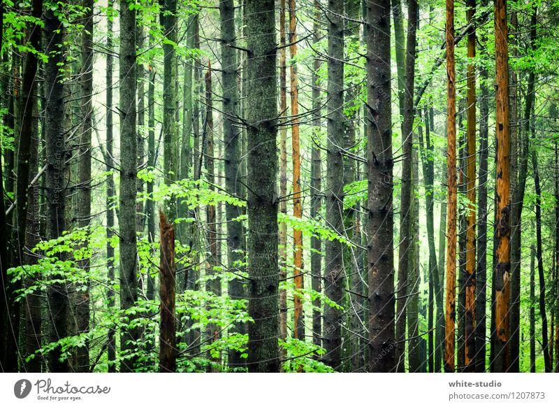 Wald in Sicht Umwelt Natur Pflanze Baum Park Spaziergang mystisch grün Waldsterben Baumstamm Baumkrone Baum fällen Erholung Erholungsgebiet Märchenwald
