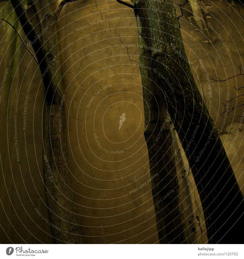 urbantrees Natur Baum Wald Erholung Herbst Tod dunkel Wand Mauer Traurigkeit Park Regen Wassertropfen Wachstum trist Trauer