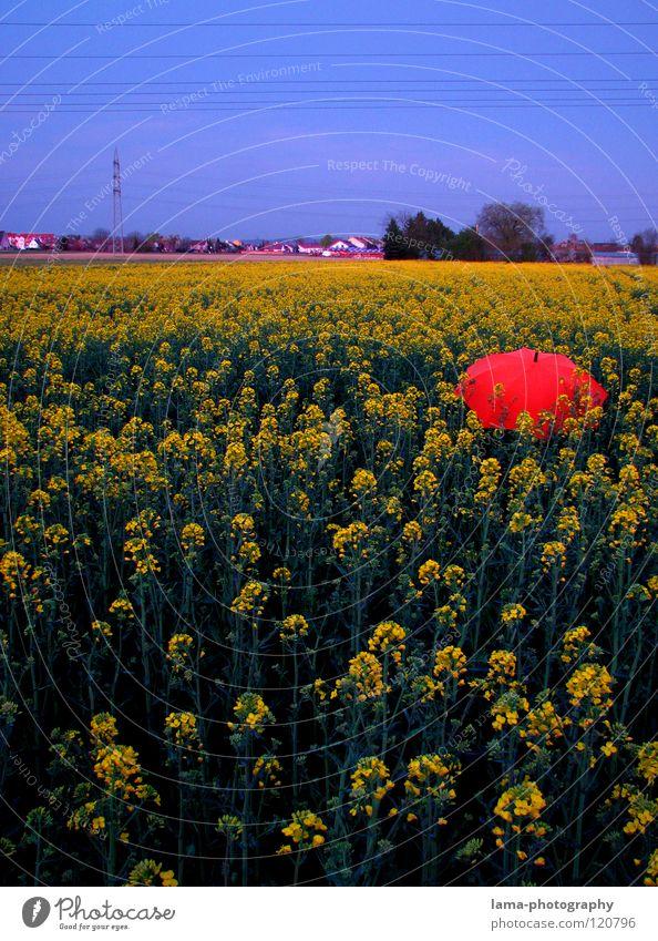 Dämmerung - End of Raps Sonnenuntergang verloren vergessen Leitung Dorf genießen ruhig träumen Sommer Rapsfeld Feld Wiese Ackerbau Landwirtschaft Frühling