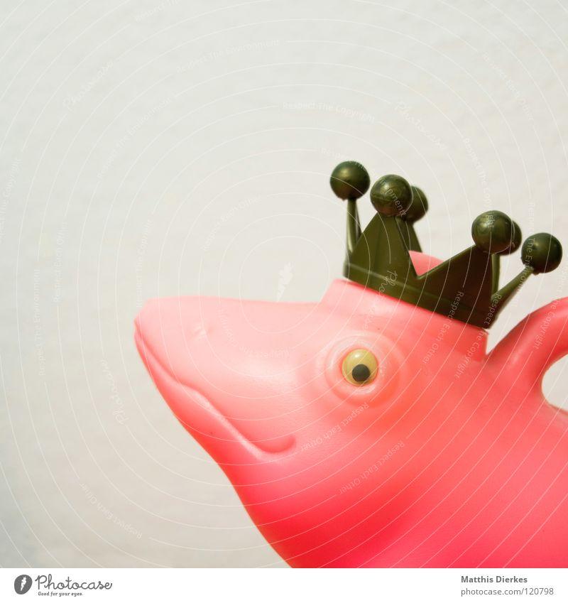 König Zett Froschkönig Gießkanne weiß rosa rot Märchen Tier Dinge Gute Laune Ausstellung interessant aufregend Häusliches Leben obskur King Crown Baumkrone Mund