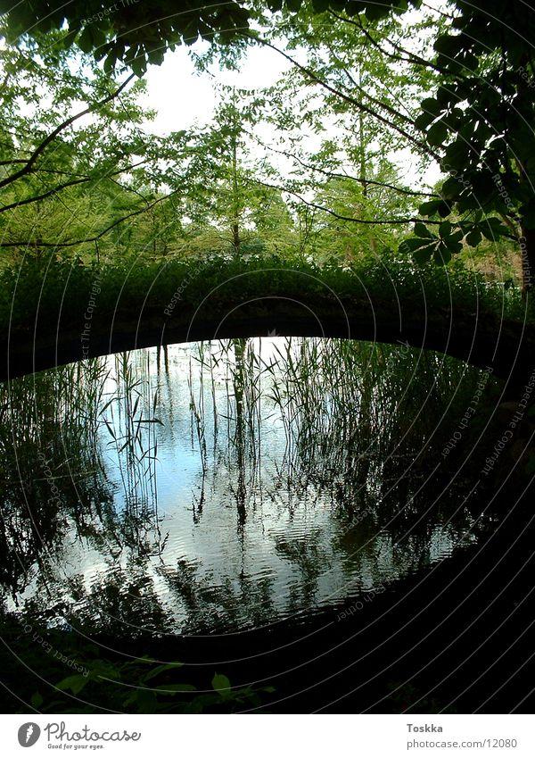 Ufer Bach See Steg Schilfrohr Wasserspiegelung Reflexion & Spiegelung Baum grün Küste Brücke