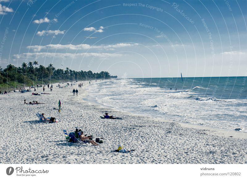 naples beech florida Wasser Blauer Himmel Surfen Windsurfing