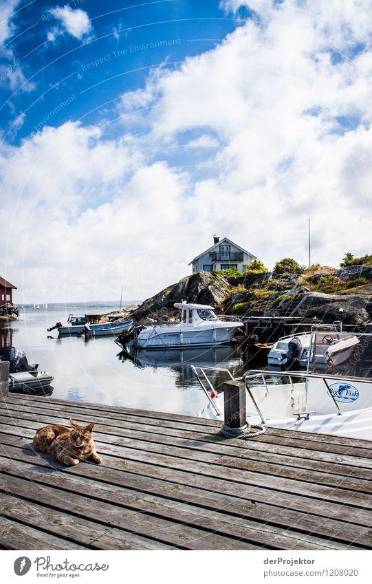 Entspannte Katze am Hafen Natur Ferien & Urlaub & Reisen Sommer Landschaft Freude Umwelt Gefühle Küste Zufriedenheit Tourismus Insel Ausflug Abenteuer Seil