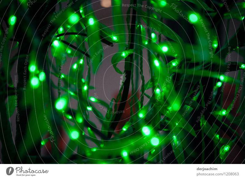 Es grünt so grün.. Stil Leben Ausflug Einkaufszentrum Handel Leuchtdiode Schönes Wetter exotisch Queensland Australien Fußgängerzone Lichterkette Lichtschein