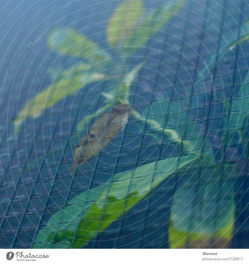Gewächshaus Pflanze Botanik Blume Baum Sträucher kleben gefangen eingeschlossen Justizvollzugsanstalt Halt stoppen Aufenthalt Gitter Draht Maschendraht