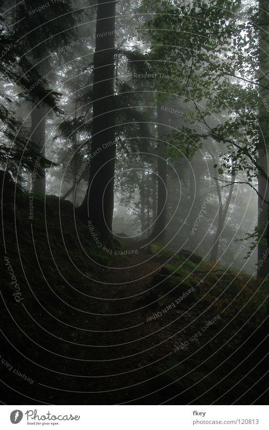 The Fog Nebel dunkel böse verloren schmal Hügel steinig Frankreich Angst Bäume Wald hoch geschlossen Natur Wege & Pfade Berge u. Gebirge Einsamkeit Landschaft