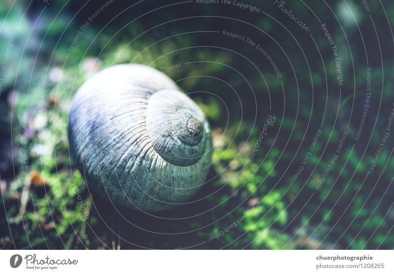 Schnecke versteck dich! Freiheit Sommer Umwelt Natur Moos 1 Tier Erholung schlafen authentisch Bekanntheit dreckig Ekel schleimig Tapferkeit selbstbewußt Mut