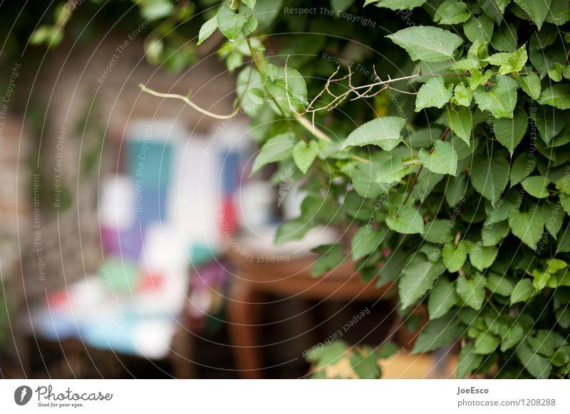 #1208288 Wohlgefühl Zufriedenheit Erholung Freizeit & Hobby Sommer Häusliches Leben Wohnung Garten Sessel Stuhl Tisch Originalität Wärme Rechtschaffenheit