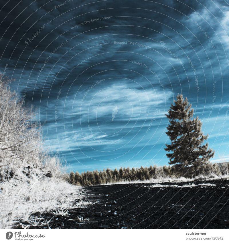 Der Frühling kommt! Personenzug Infrarotaufnahme Farbinfrarot Baum Holzmehl Wald Einsamkeit Sträucher Wolken Schleier weiß schwarz Himmel Infarot Surrealismus