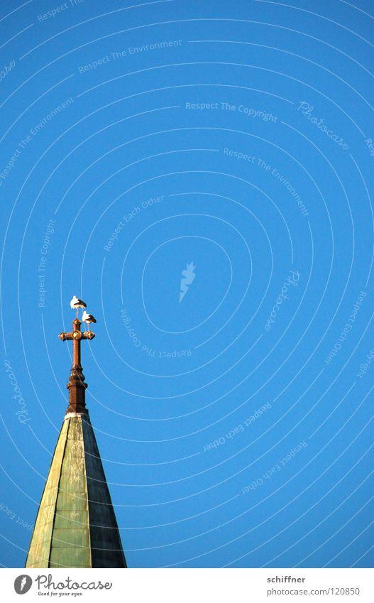 Babylieferserviceparkplatz Himmel blau Religion & Glaube Vogel fliegen Rücken Luftverkehr Umweltschutz Storch gleiten Kirchturm Spannweite Tierschutz Kunstflug