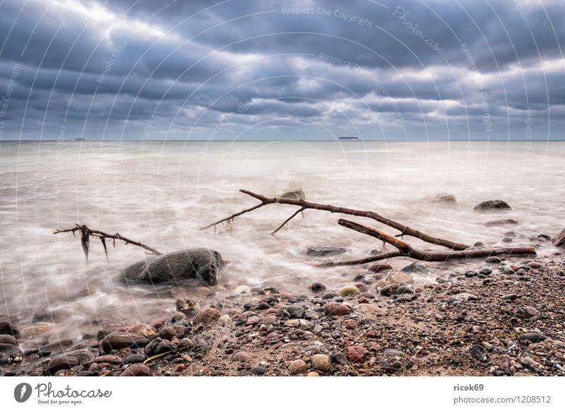 Treibholz an der Küste der Ostsee Erholung Ferien & Urlaub & Reisen Strand Meer Natur Landschaft Wasser Wolken Wetter Stein Holz Romantik Idylle Ast Zweig