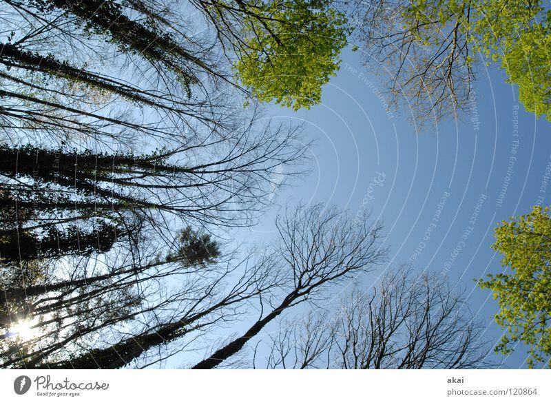 Himmel auf Erden 16 Nadelbaum Wald himmelblau Geometrie Laubbaum Perspektive Nadelwald Laubwald Waldwiese Paradies Waldlichtung ruhig grün Pflanze Baum Blatt