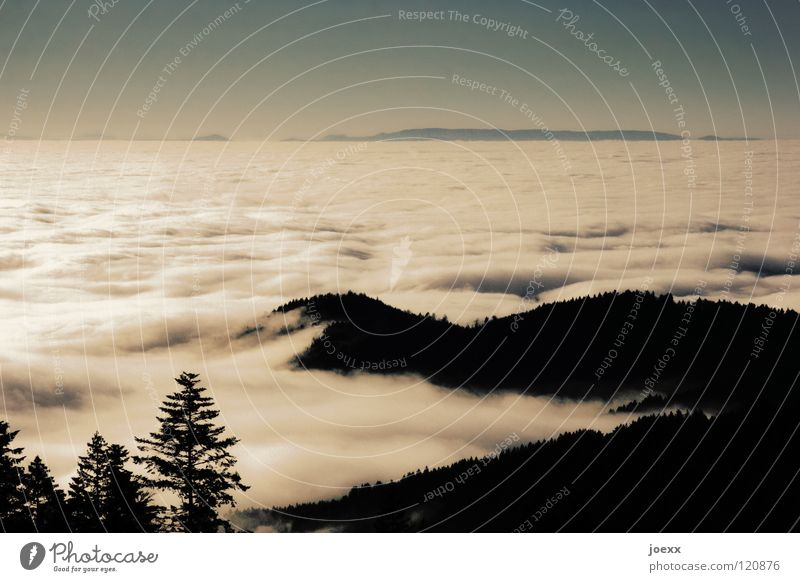 Wattemeer Natur Himmel Baum Ferien & Urlaub & Reisen Wolken Ferne Wald Erholung Berge u. Gebirge Landschaft Zufriedenheit Nebel Aussicht Idylle Hügel Tanne