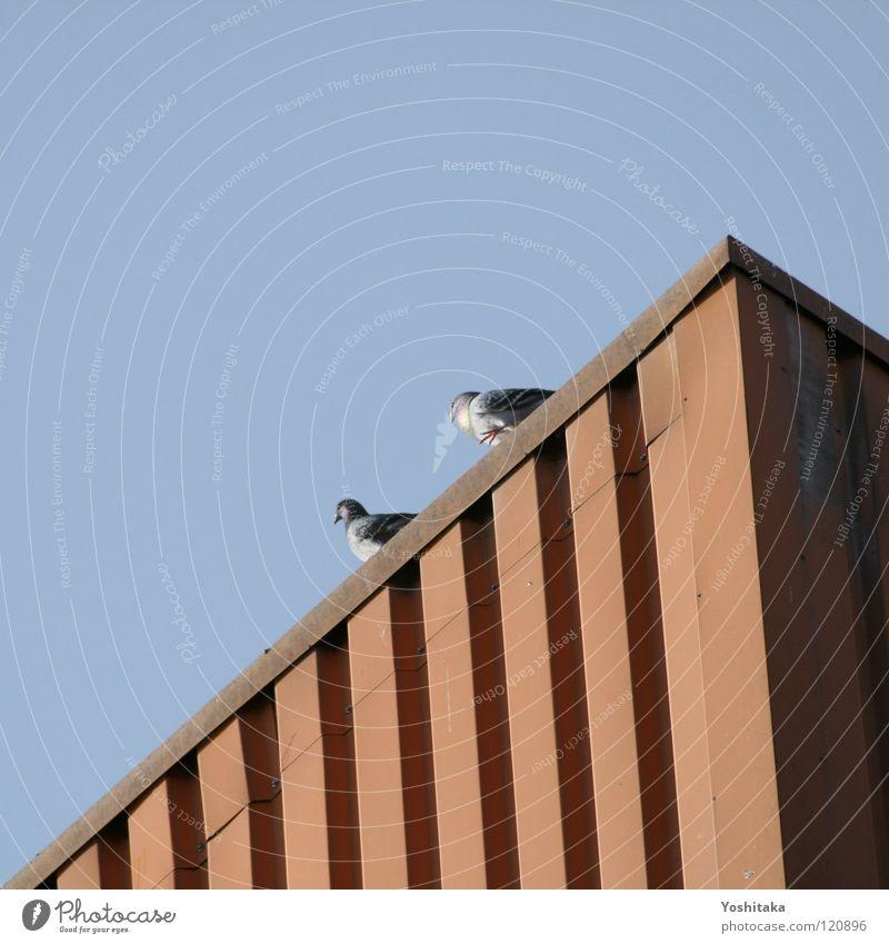 Tagwache Himmel blau rot Vogel Frieden Feder Taube Container
