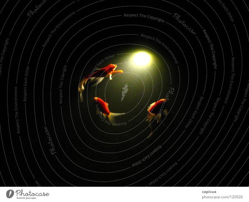 Emptiness Licht 3 Fluss Bach Fisch water fish light river darkness abstract dream orange three aquatic sea deep