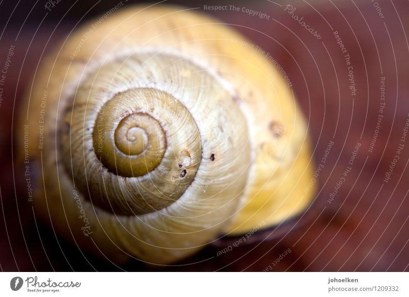 1 1 2 3 5 8 13 Umwelt Natur Tier Garten Feld Schnecke Schneckenhaus Weichtier Ornament Spirale warten gelb rot Sicherheit Schutz Geborgenheit bizarr einzigartig