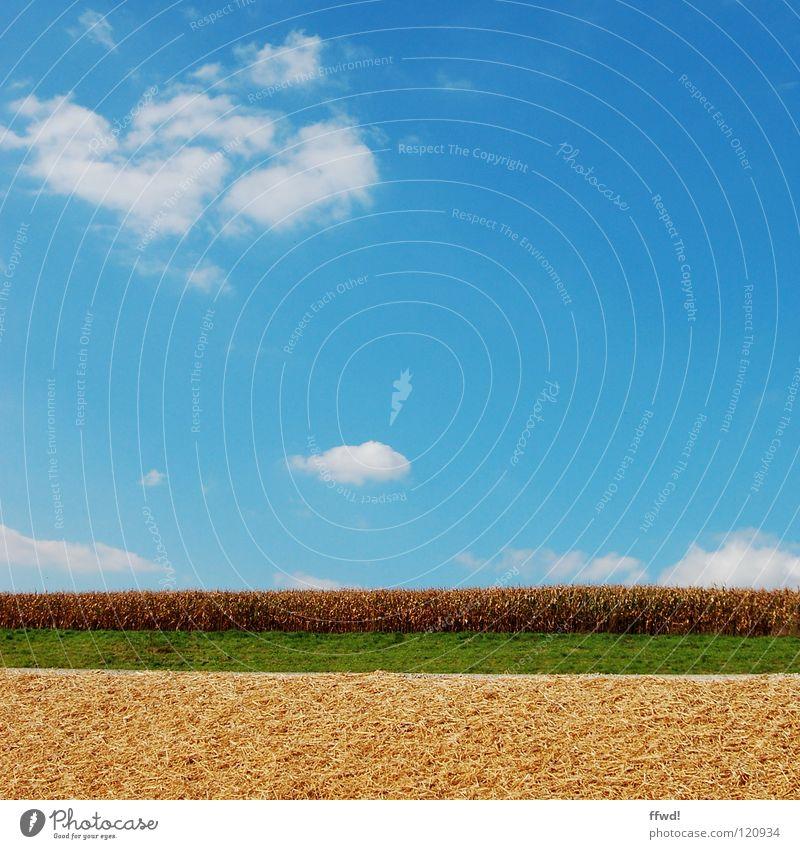 Sommer im Quadrat 1.2 Wolken Feld Wiese grün Weizen Landwirtschaft Reifezeit gerade einfach sehr wenige Himmel blau gutes Wetter schöner Tag Getreide Ackerbau