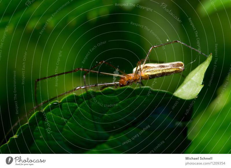 Spinne Tier Wildtier 1 natürlich dünn grün Beine lang Farbfoto mehrfarbig Detailaufnahme Makroaufnahme Textfreiraum oben Schwache Tiefenschärfe