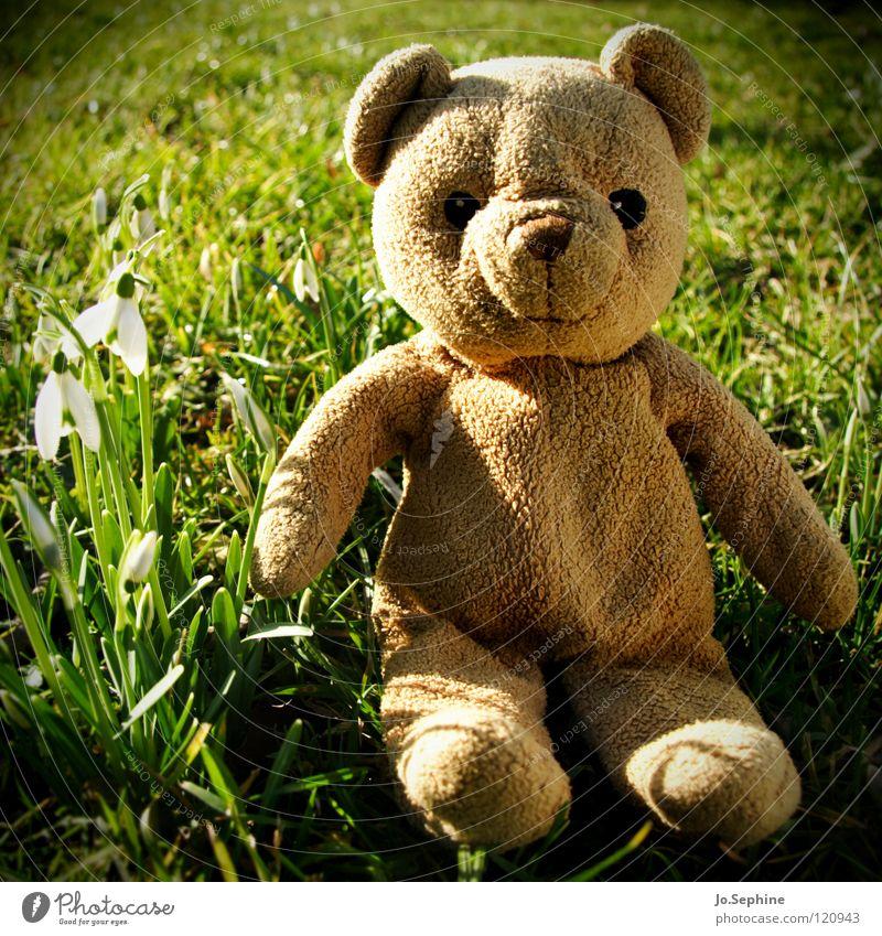 Blund entdeckt den Frühling Sonne Blume Pflanze Freude Wiese Gras Frühling sitzen Rasen Spielzeug Schönes Wetter Teddybär Stofftiere Schneeglöckchen Frühlingsblume Frühblüher