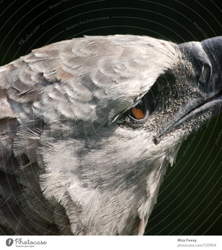 Blick in die Ferne Natur Auge Tier grau Vogel Zoo Aggression Anmut Adler Greifvogel