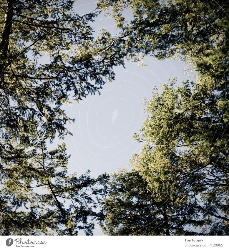 Der Himmel über Frankfurt I Waldlichtung Baum Sträucher grün verzweigt Tanne Fichte Birke Buche Eiche Linde Ahorn Luft Spaziergang wandern Aussicht Blick