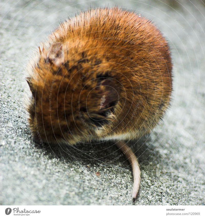 Katzenfutter - SIE LEBT!!! Schwanz Säugetier Tier Fell Beton Asphalt hocken Erholung ducken Maus Leben Mäuschen Haare & Frisuren Stein Straße Blick sitzen