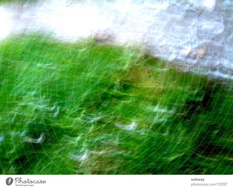 Space Weed weiß grün Bewegung Sinnesorgane Reaktionen u. Effekte schütteln Fototechnik