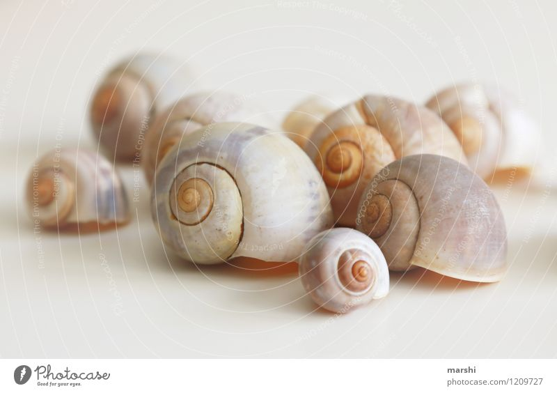 Schneckenhaussiedlung Natur Tier braun Dekoration & Verzierung Tiergruppe viele Stillleben Muschel
